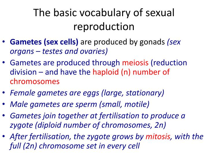 The basic vocabulary of sexual reproduction
