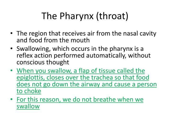 The Pharynx (throat)