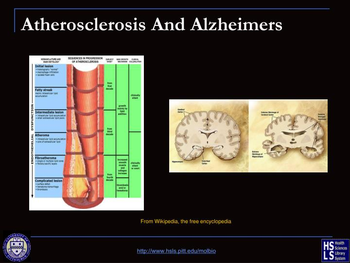 Atherosclerosis And