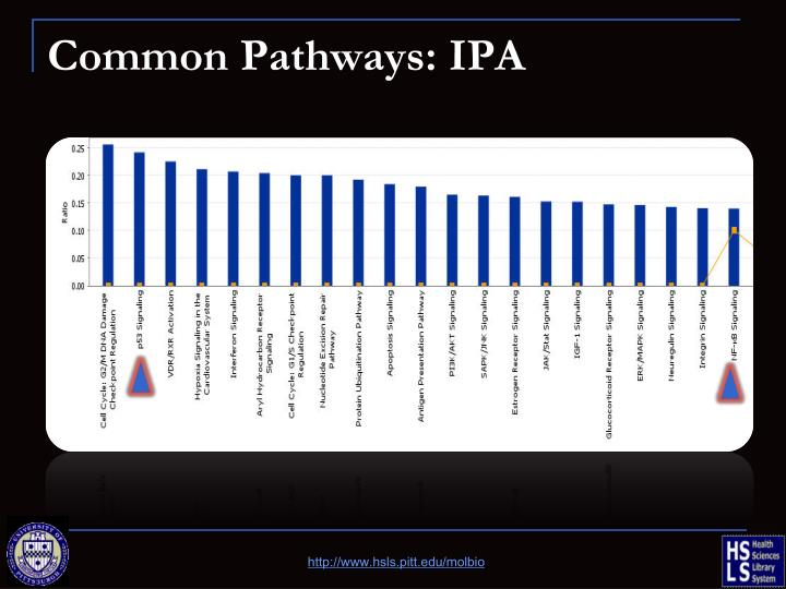 Common Pathways: IPA