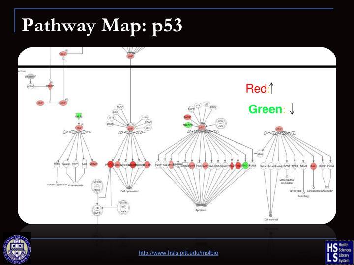Pathway Map: p53