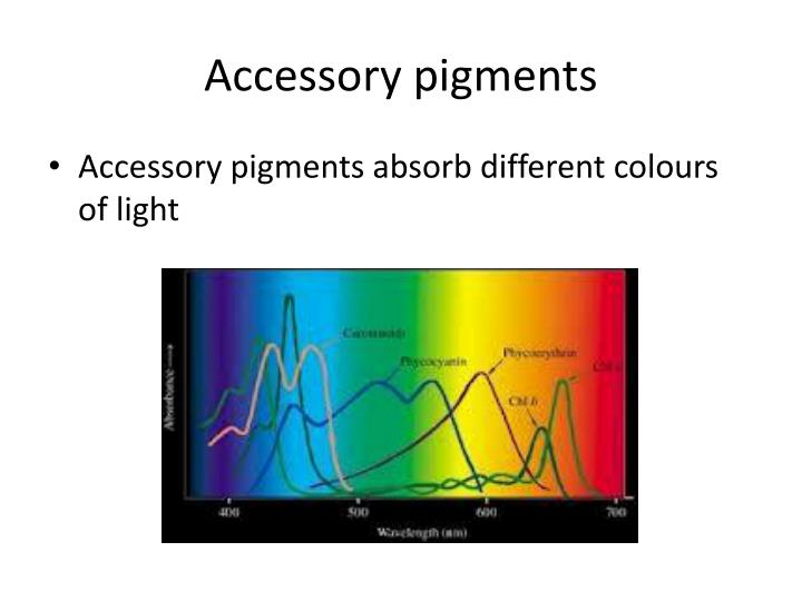 Accessory pigments