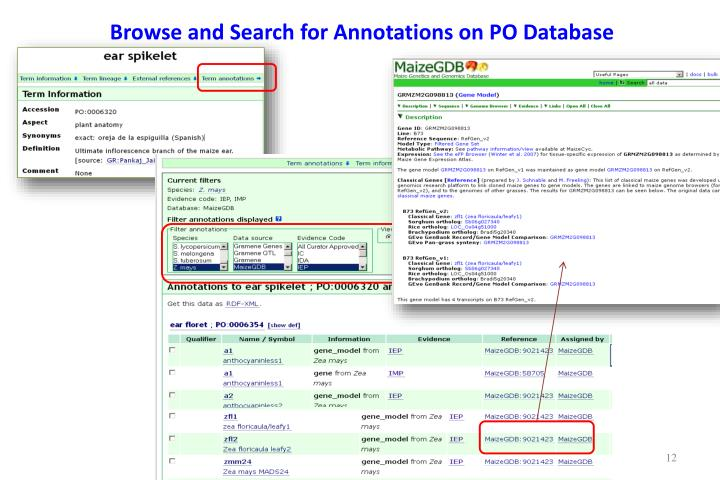 Browse and Search for Annotations on PO Database