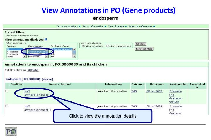 View Annotations in PO (Gene products)