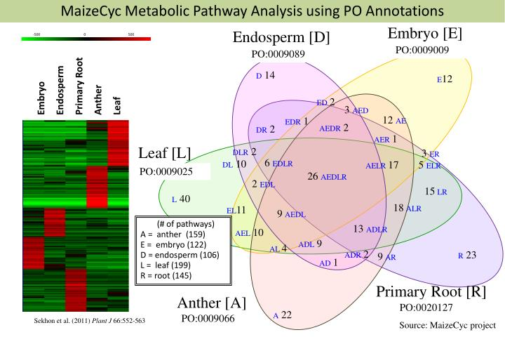 MaizeCyc Metabolic Pathway Analysis using PO Annotations