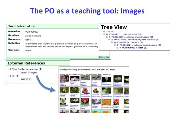 The PO as a teaching tool: