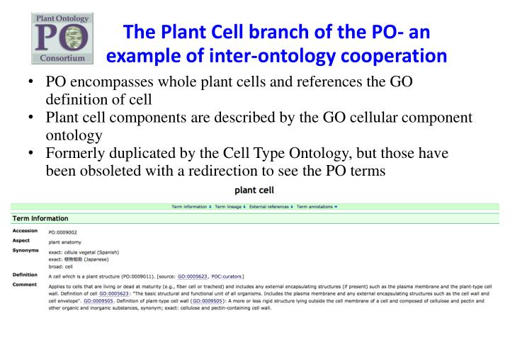 The Plant Cell branch of the PO- an example of inter-ontology cooperation