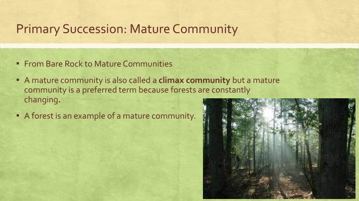 Primary Succession: Mature Community