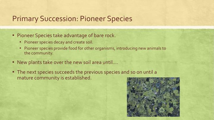 Primary Succession: Pioneer Species