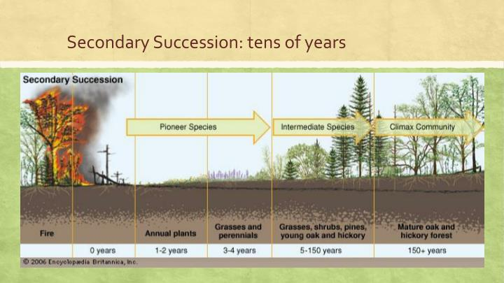 Secondary Succession: tens of years