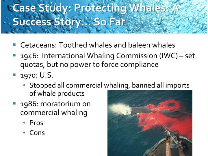 Case Study: Protecting Whales: A Success Story… So Far