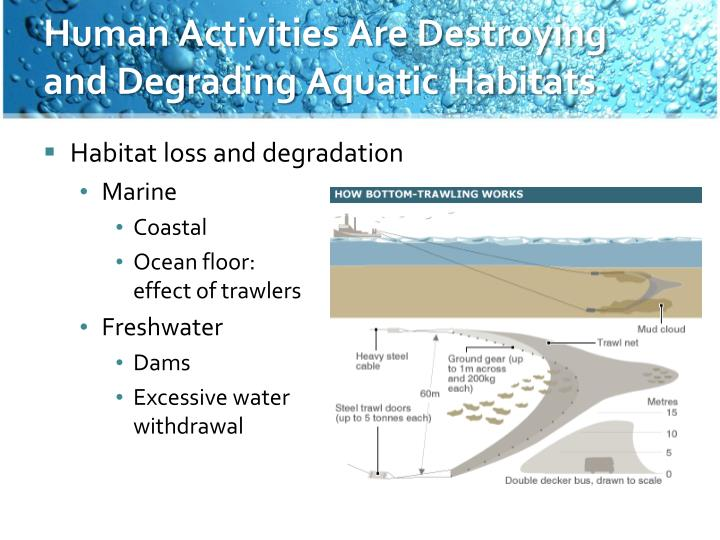 Human Activities Are Destroying and Degrading Aquatic Habitats