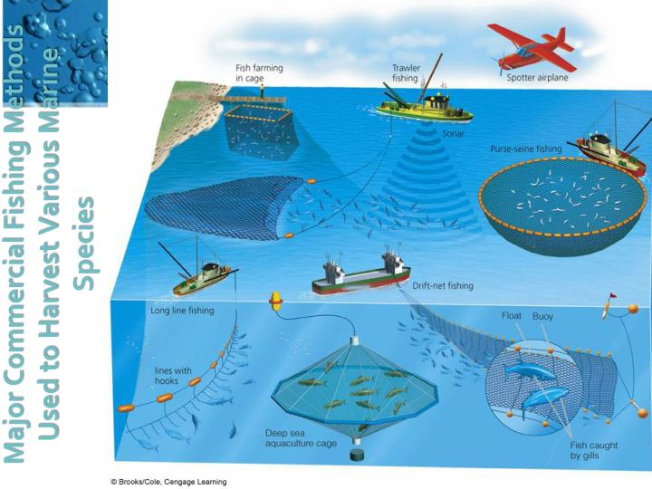 Major Commercial Fishing Methods Used to Harvest Various Marine Species