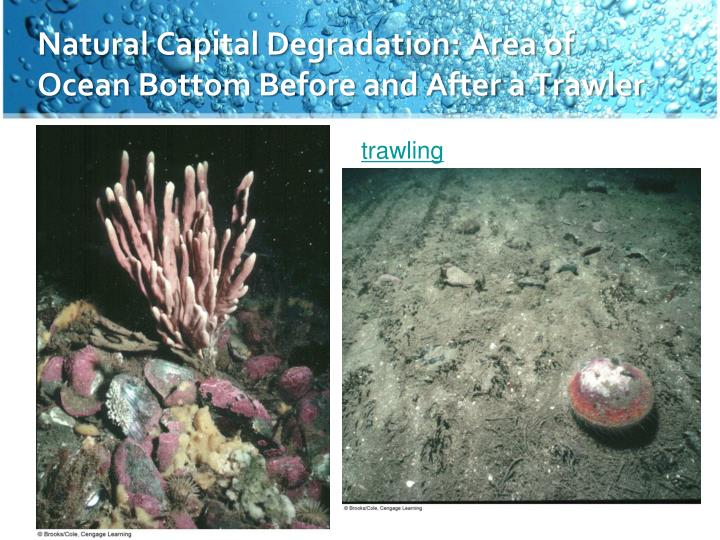 Natural Capital Degradation: Area of Ocean Bottom Before and After a Trawler