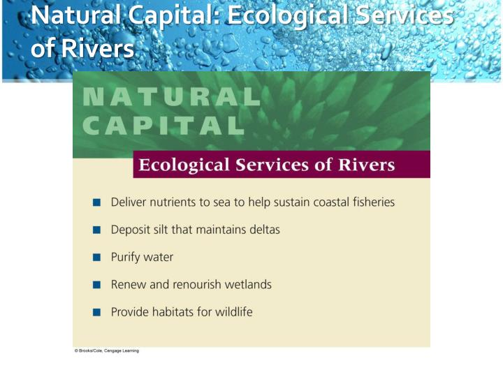 Natural Capital: Ecological Services