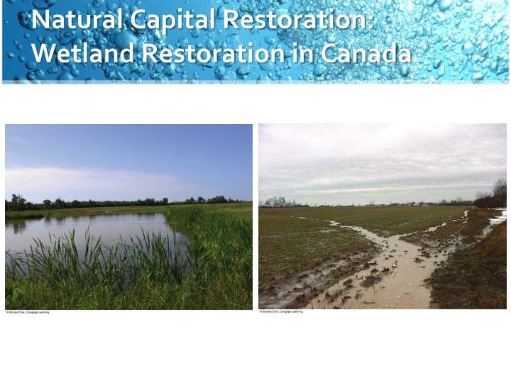 Natural Capital Restoration: Wetland Restoration in Canada