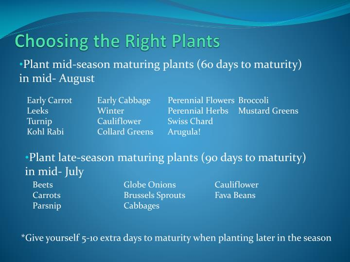 Choosing the Right Plants
