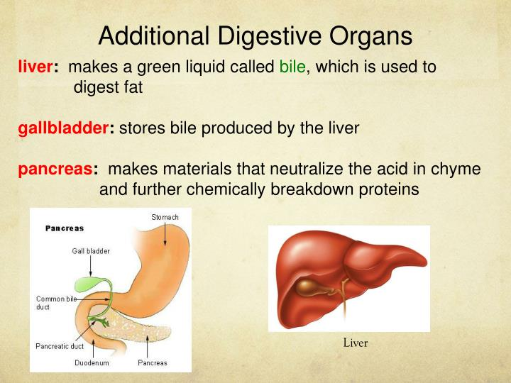 Additional Digestive Organs