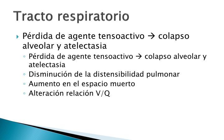 Tracto respiratorio