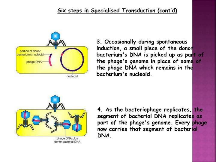 Six steps in Specialised Transduction (cont'd)