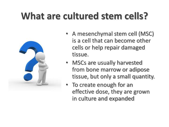What are cultured stem cells?