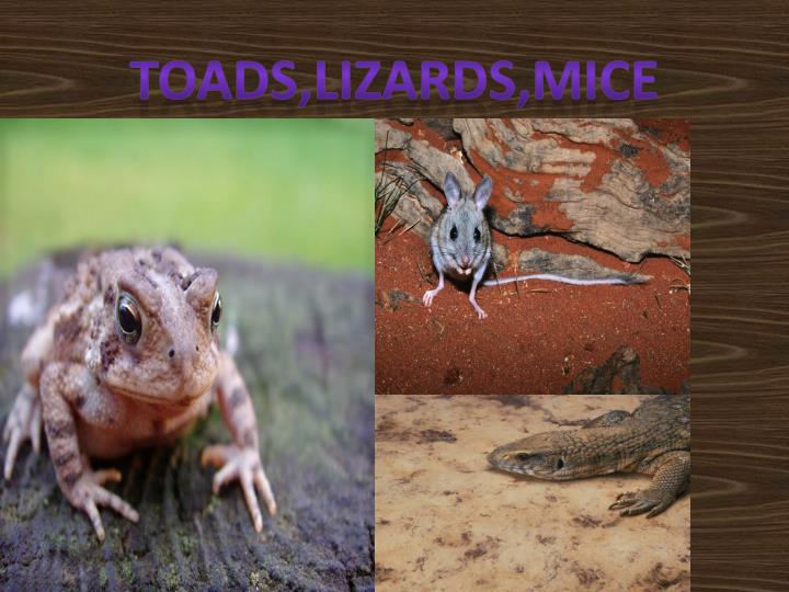 Toads,lizards,mice