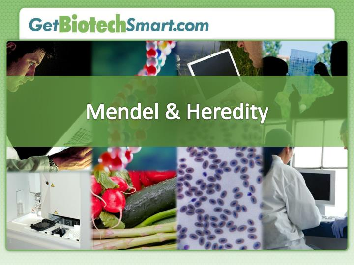 Mendel heredity
