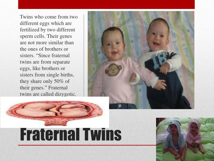 Twins who come from two different eggs which