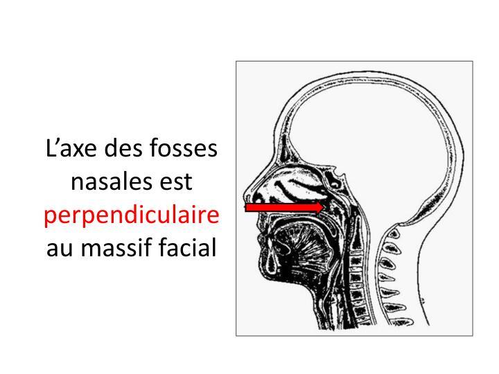 L'axe des fosses nasales est