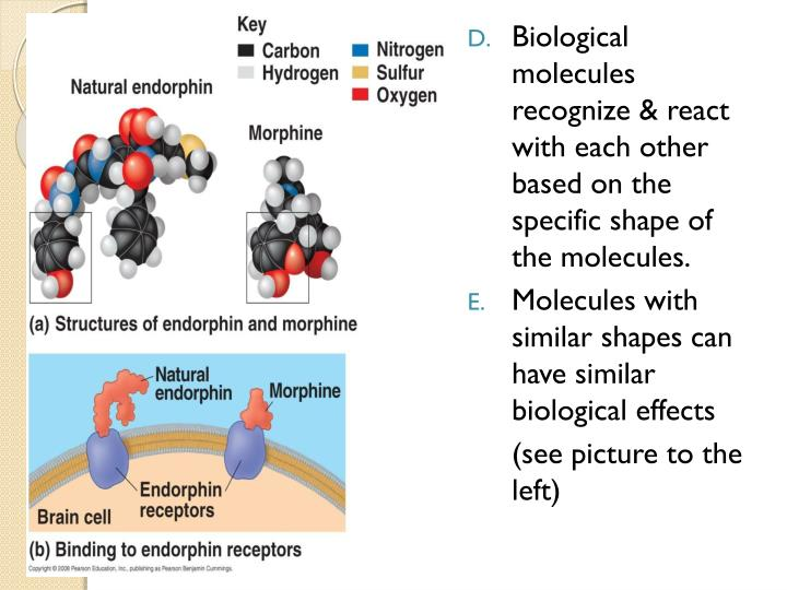 Biological molecules recognize & react with each other based on the specific shape of the molecules.
