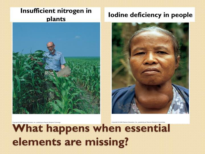 Insufficient nitrogen in plants