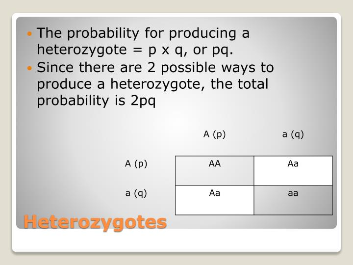 The probability for producing a heterozygote = p x q, or
