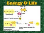 energy life2