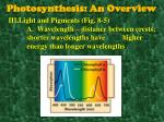 photosynthesis an overview1