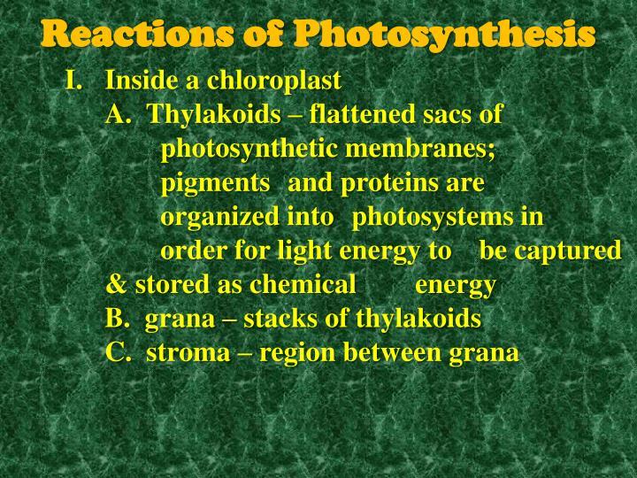 Inside a chloroplast