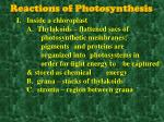 reactions of photosynthesis1