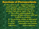 reactions of photosynthesis8