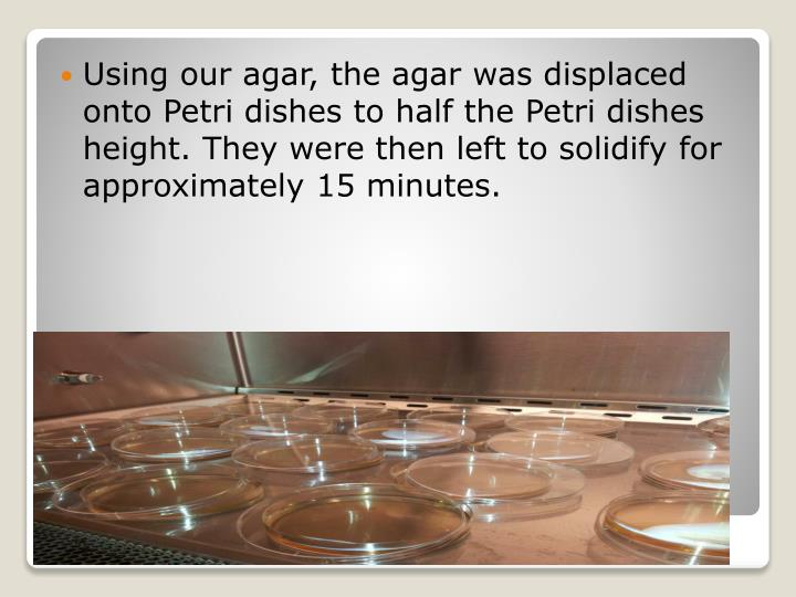 Using our agar, the agar was displaced onto Petri dishes to half the Petri dishes height. They were then left to solidify for approximately 15 minutes.