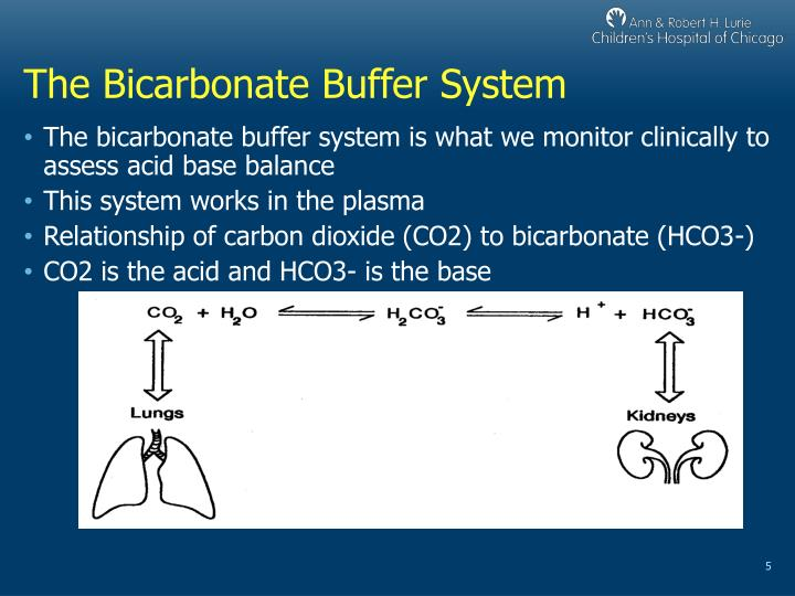 The Bicarbonate Buffer System