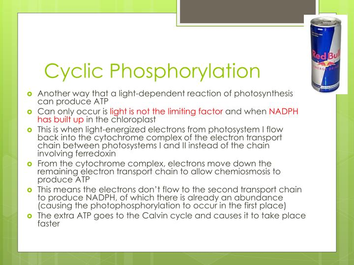 Cyclic Phosphorylation