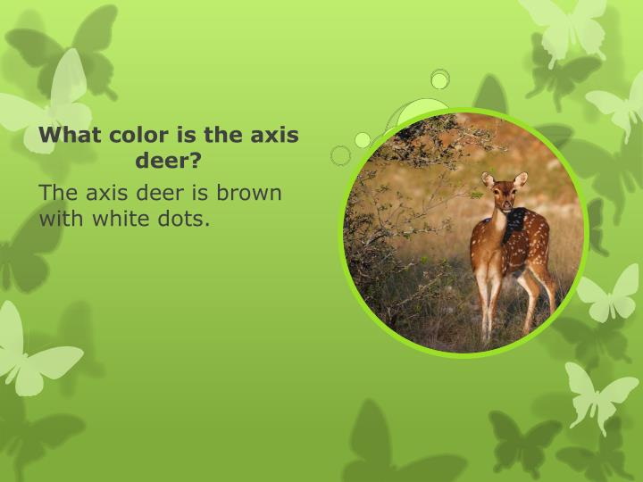 What color is the axis deer?
