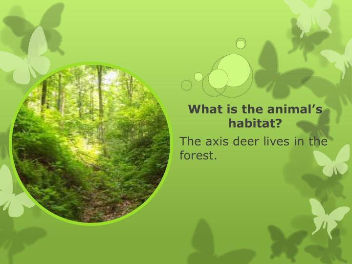 What is the animal's habitat?