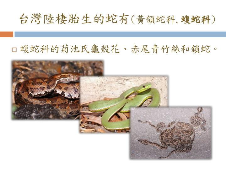 台灣陸棲胎生的蛇有