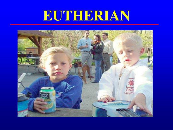EUTHERIAN