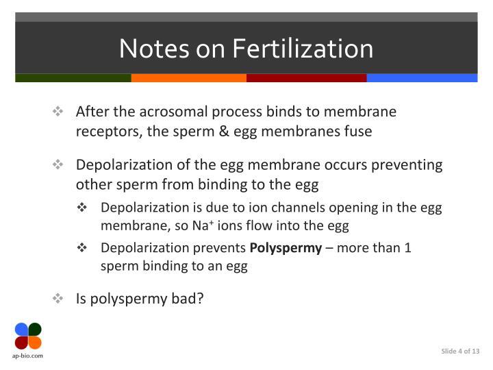 Notes on Fertilization