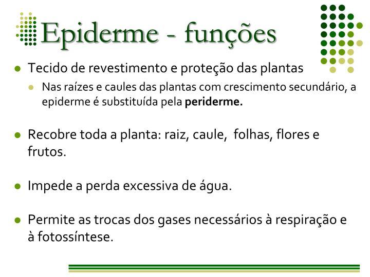 Epiderme - funções