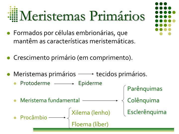 Meristemas Primários