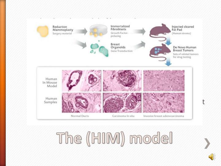 developed a model of human breast cancer in which many of these same features have been applied to genetically modified human breast tissue.