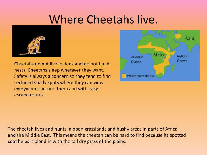 Where cheetahs live