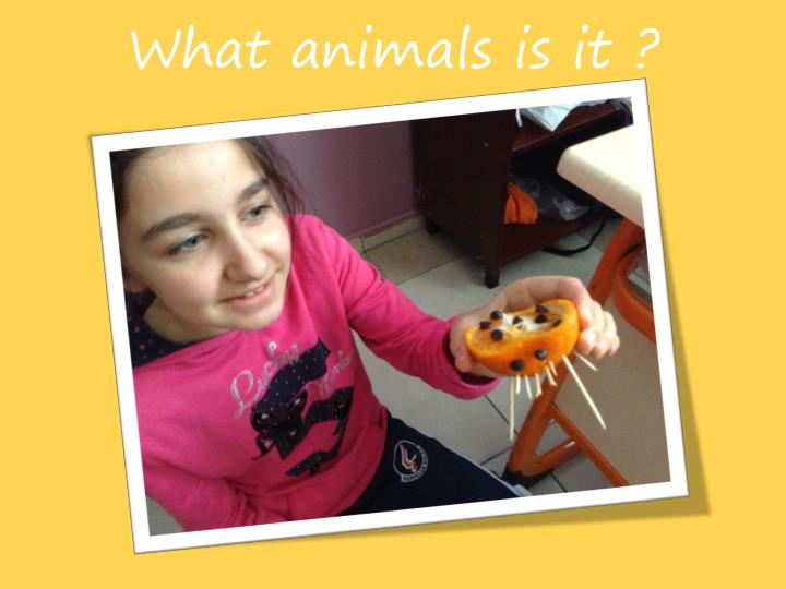 What animals is it